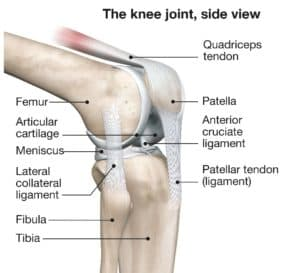 Knee Joint Side-View Infographic