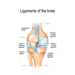 Knee Ligament Infographic
