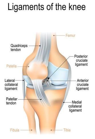 Knee Ligament Infographics
