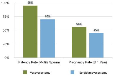 Vasectomy Reversal Patency Success Rate