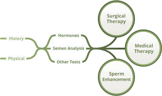 PATHWAY FOR MALE INFERTILITY EVALUATION